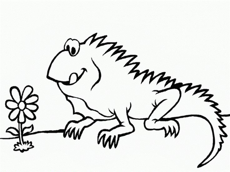 for kindergarten Free Printable Iguana Coloring Pages For Kids to print out