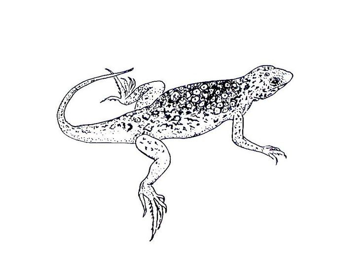for sunday school Free Printable Lizard Coloring Pages For Kids pdf