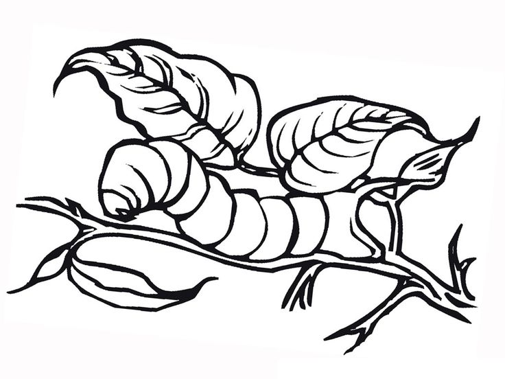 Easy Free Printable Caterpillar Coloring Pages For Kids Pdf