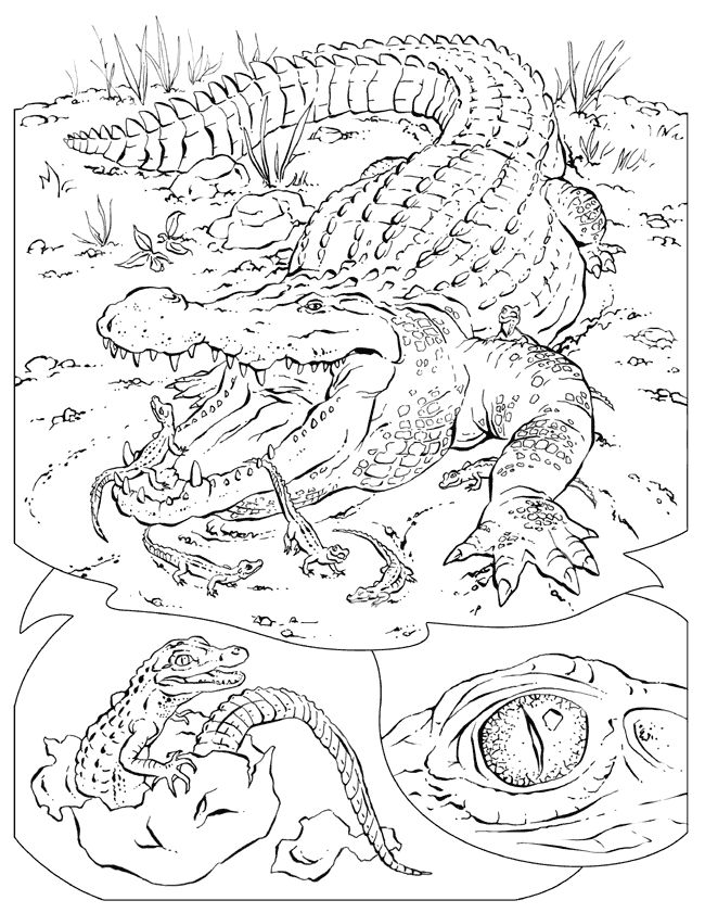 online Free Printable Crocodile Coloring Pages For Kids for boys