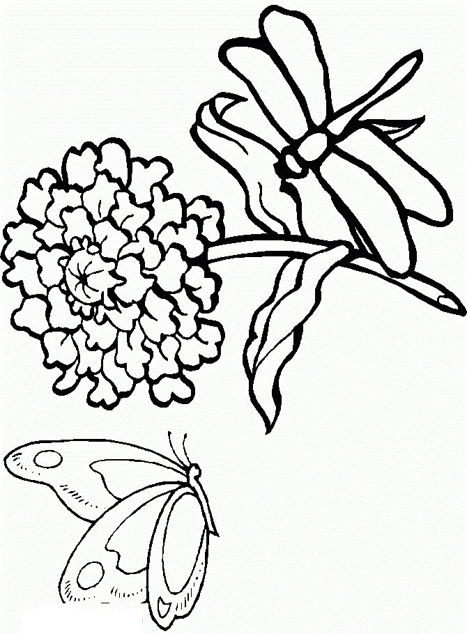 free printable Free Printable Dragonfly Coloring Pages For Kids for girls