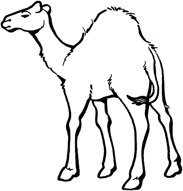 for toddlers Free Printable Camel Coloring Pages For Kids for kids