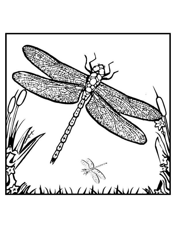 simple Free Printable Dragonfly Coloring Pages For Kids free
