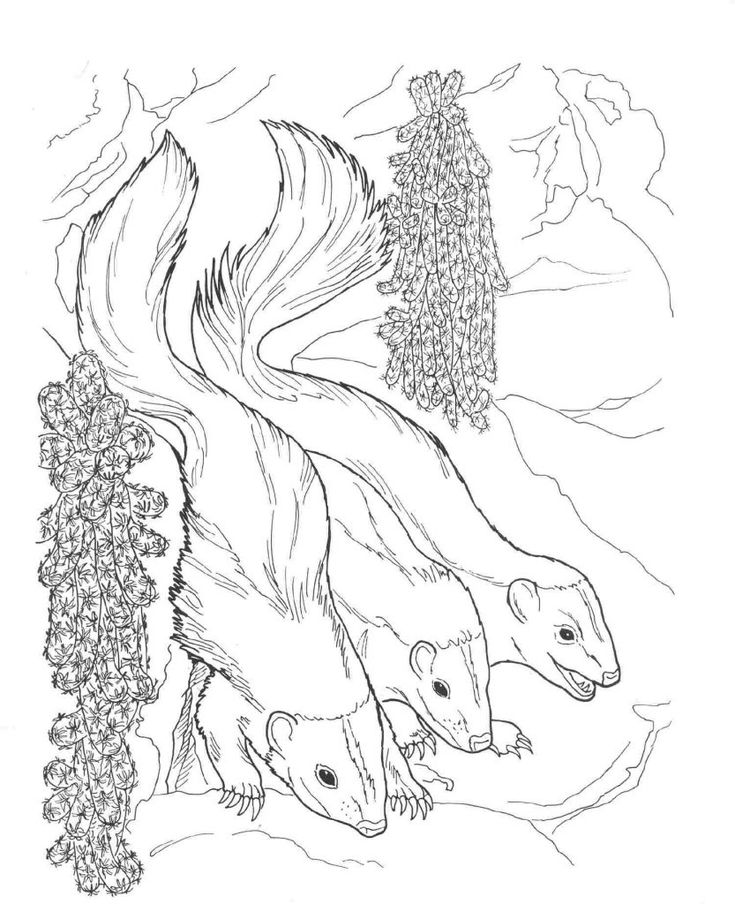 for kindergarten Free Printable Skunk Coloring Pages For Kids to print out