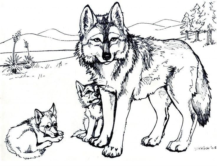 For Boys Wolf Coloring Pages For Adults Best Coloring