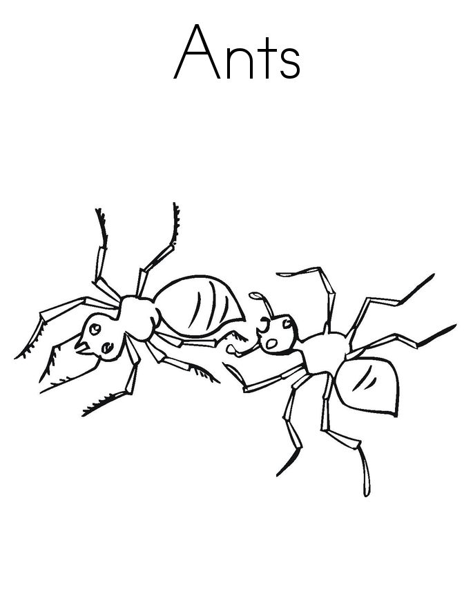 toddler Free Printable Ant Coloring Pages For Kids for boys