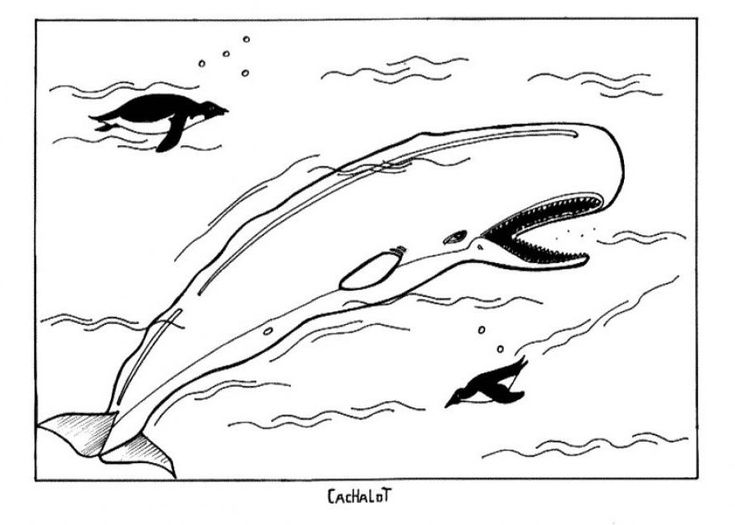 printable Free Printable Whale Coloring Pages For Kids for kindergarten