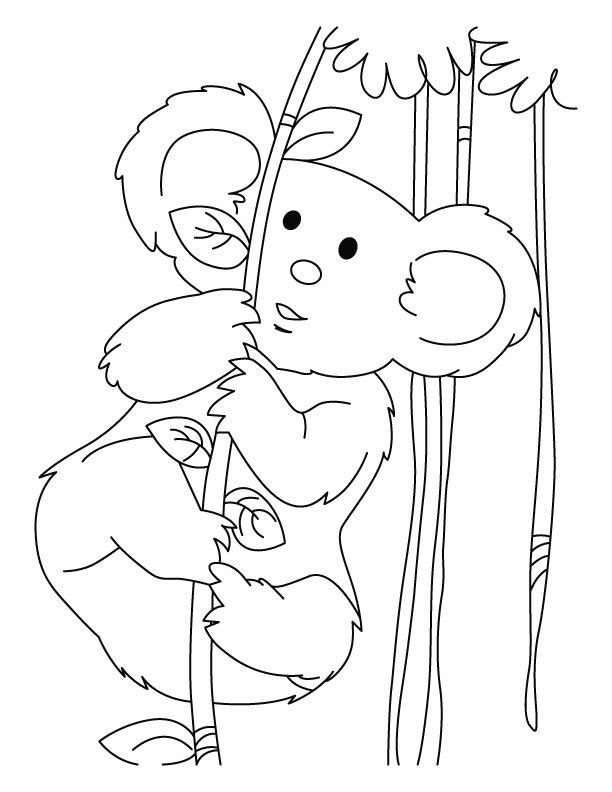 online Free Printable Koala Coloring Pages For Kids simple