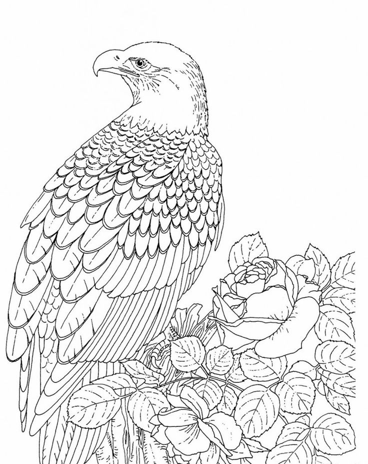 printable Free Printable Bald Eagle Coloring Pages For Kids already colored