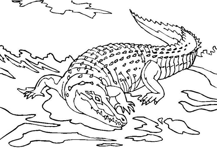 for teens Free Printable Crocodile Coloring Pages For Kids to print out