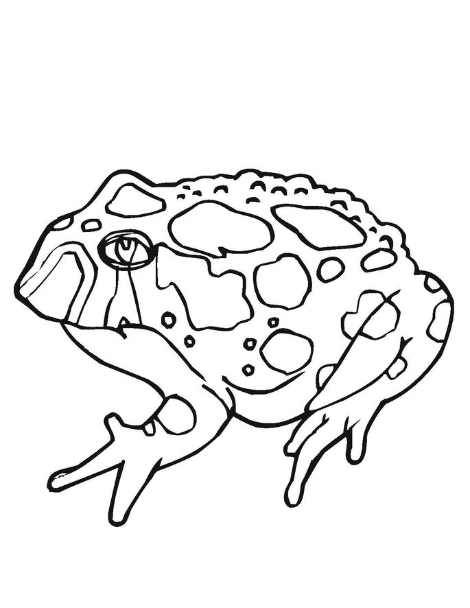 for teens Free Printable Toad Coloring Pages For Kids preschool