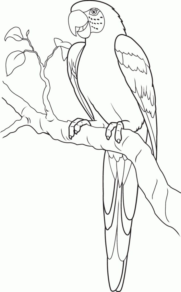online Free Printable Parrot Coloring Pages For Kids already colored