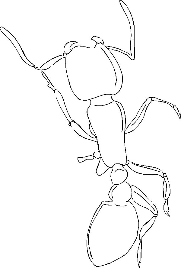 preschool Free Printable Ant Coloring Pages For Kids free printable