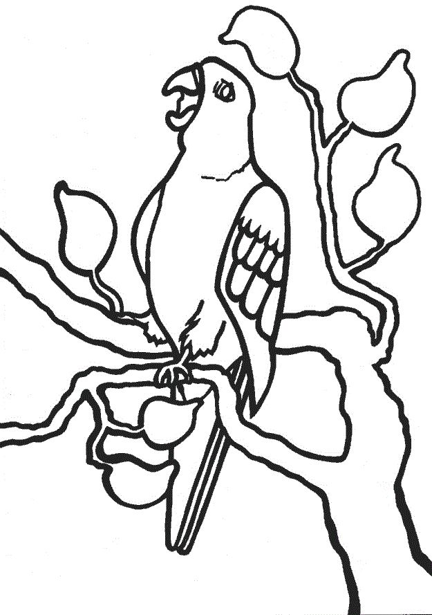 Pdf Free Printable Parrot Coloring Pages For Kids Easy