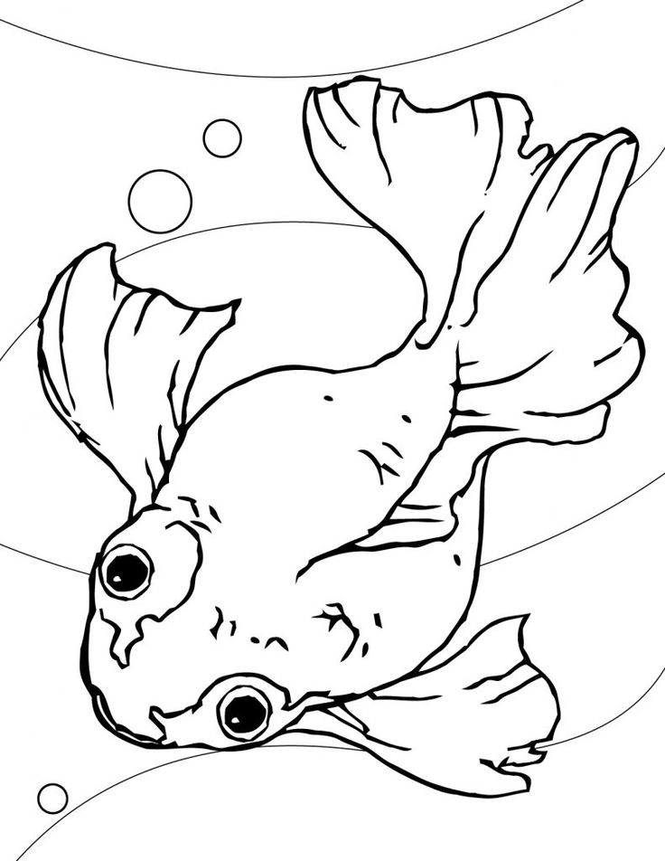 toddler Free Printable Goldfish Coloring Pages For Kids printable
