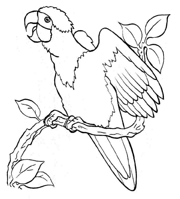 for kids Free Printable Parrot Coloring Pages For Kids preschool