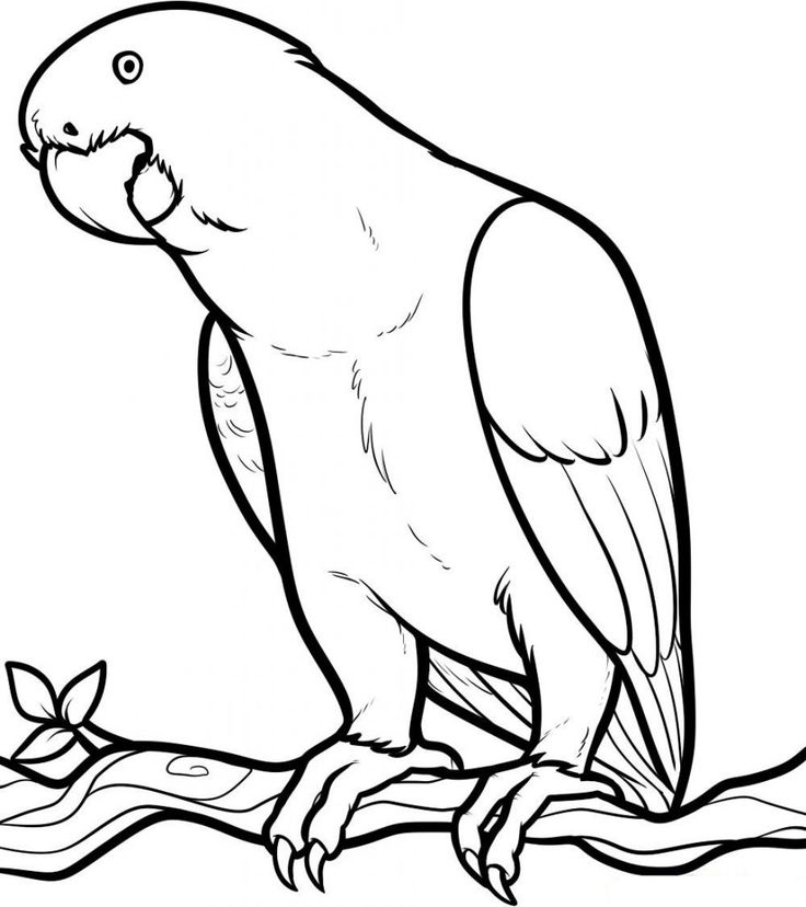 easy Free Printable Parrot Coloring Pages For Kids free