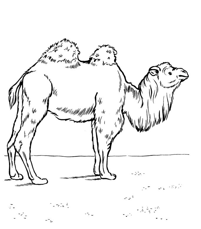already colored Free Printable Camel Coloring Pages For Kids for adults