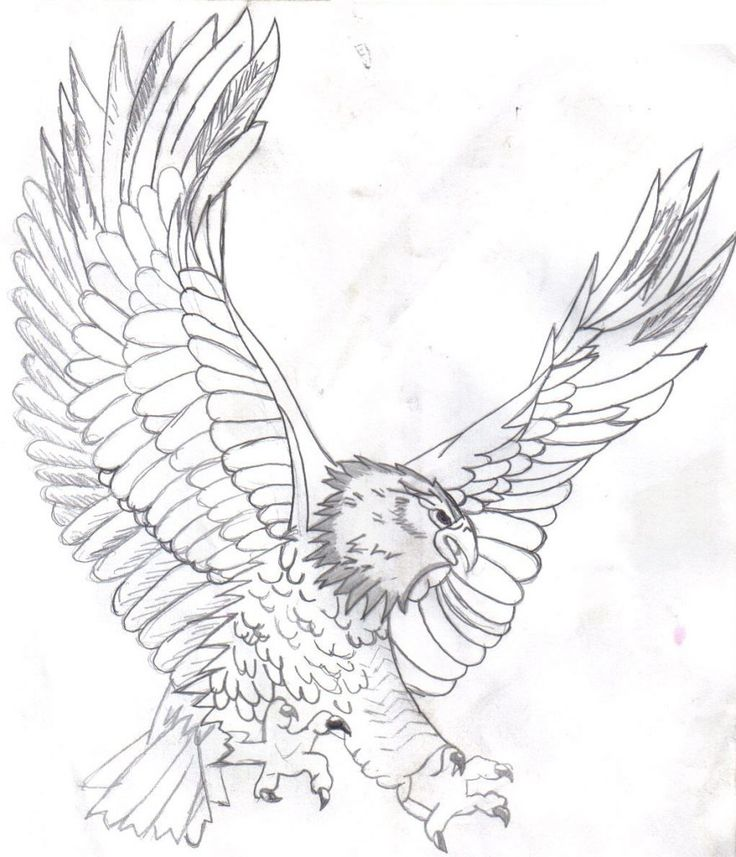 free Free Printable Bald Eagle Coloring Pages For Kids for toddlers