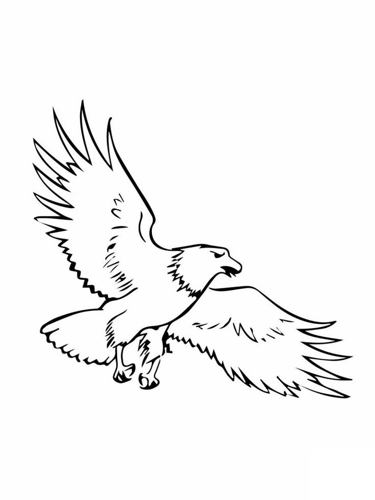 for kids Free Printable Bald Eagle Coloring Pages For Kids for teens