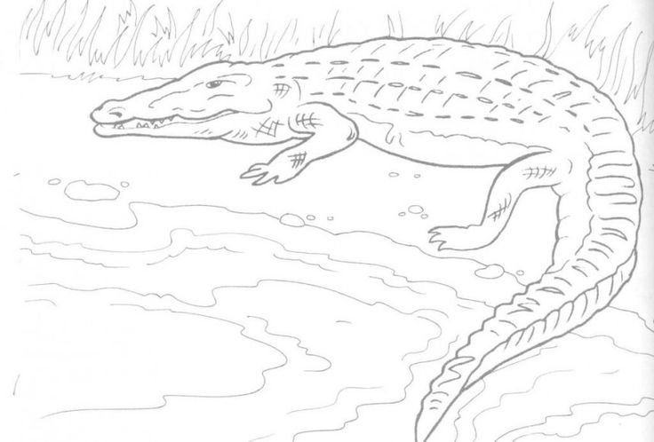 simple Free Printable Crocodile Coloring Pages For Kids for teens
