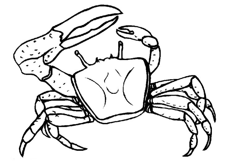 toddler Free Printable Crab Coloring Pages For Kids online