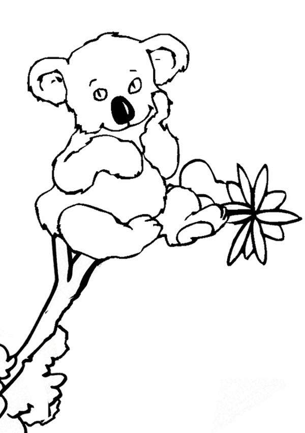 pdf Free Printable Koala Coloring Pages For Kids already colored