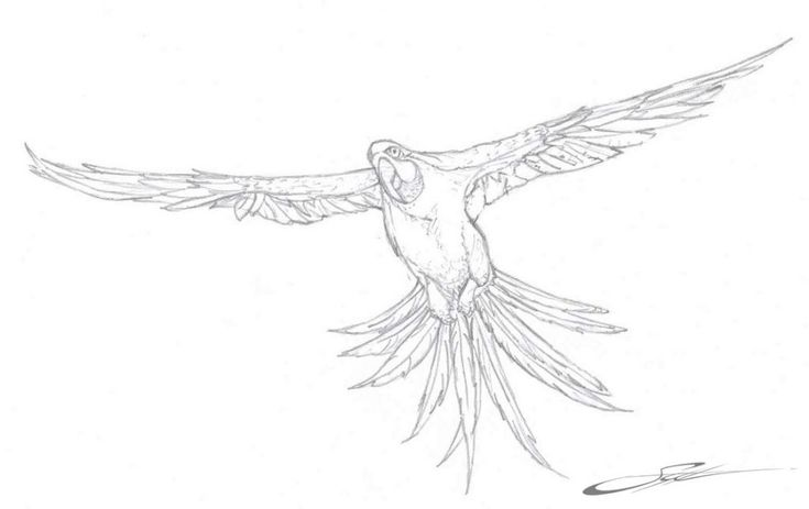 for kindergarten Free Printable Parrot Coloring Pages For Kids preschool