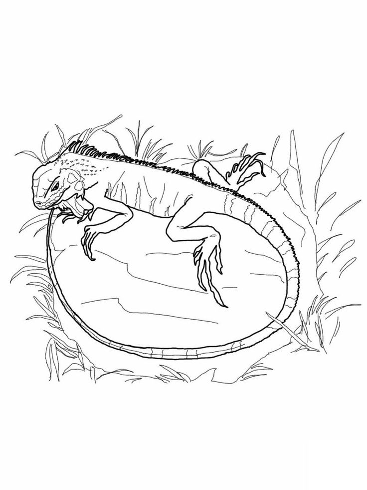 free Free Printable Iguana Coloring Pages For Kids for kids