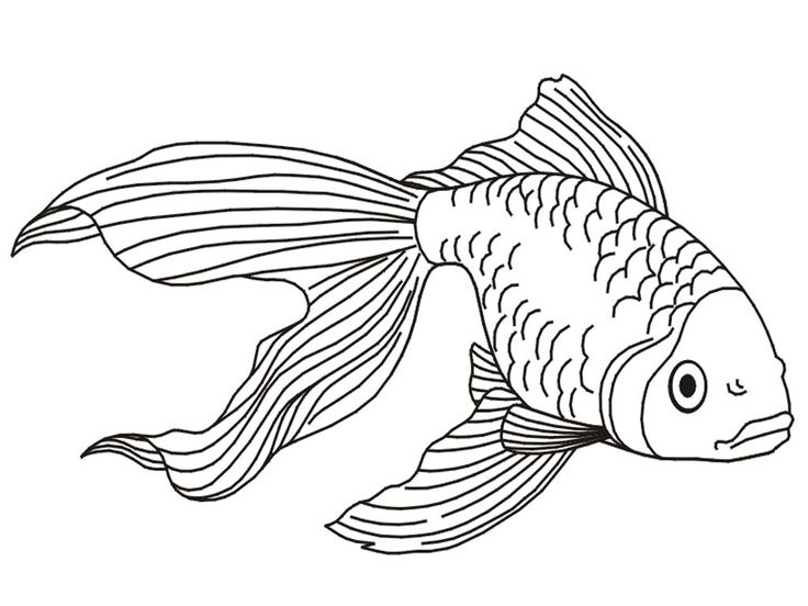 already colored Free Printable Goldfish Coloring Pages For Kids for toddlers