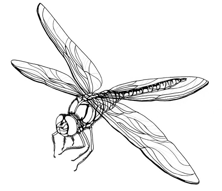 for teens Free Printable Dragonfly Coloring Pages For Kids for boys
