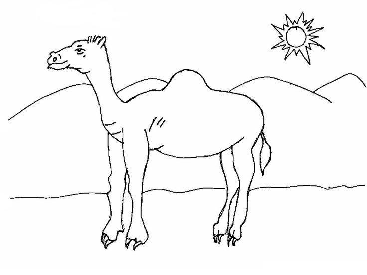 free Free Printable Camel Coloring Pages For Kids for toddlers