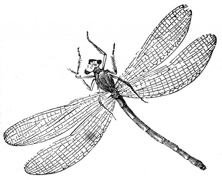 free printable Free Printable Dragonfly Coloring Pages For Kids simple
