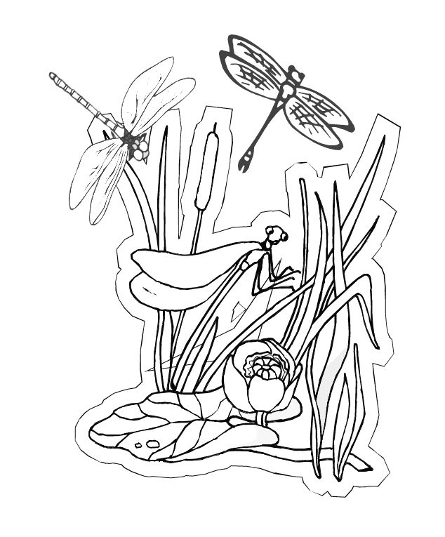 toddler Free Printable Dragonfly Coloring Pages For Kids for girls