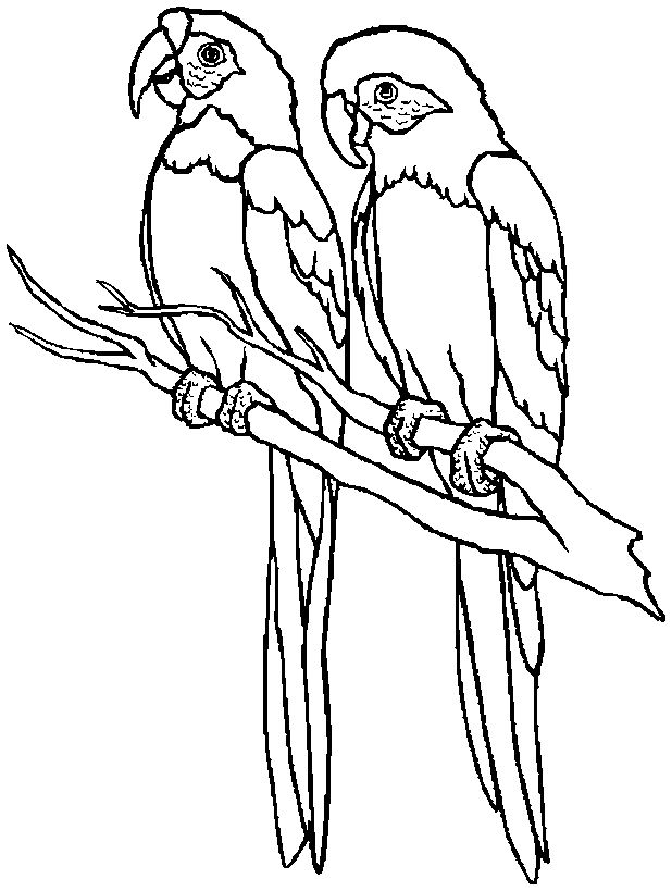 toddler Free Printable Parrot Coloring Pages For Kids for kids