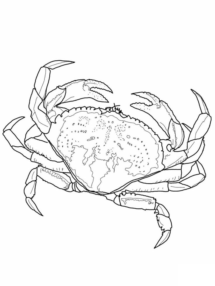 for kindergarten Free Printable Crab Coloring Pages For Kids free printable