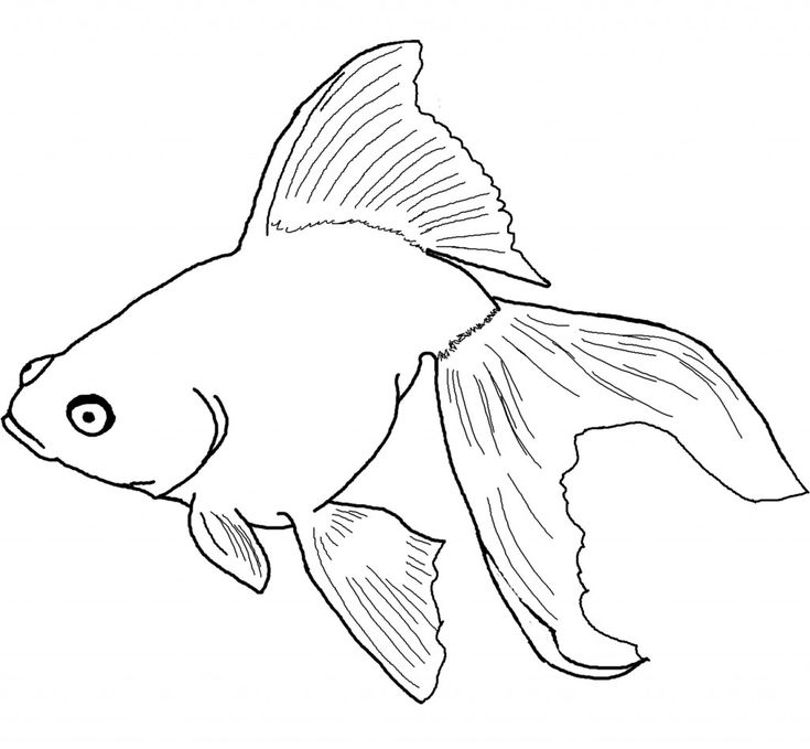 preschool Free Printable Goldfish Coloring Pages For Kids to print out