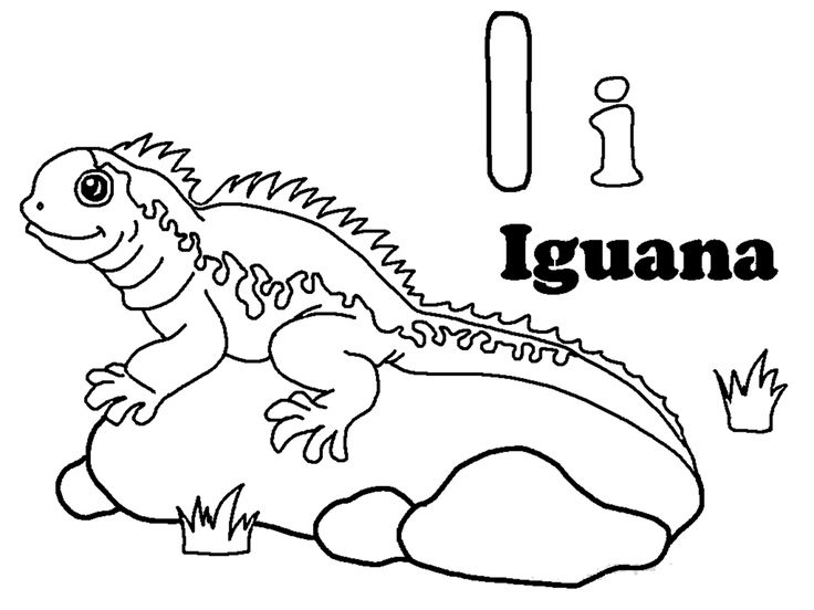 online Free Printable Iguana Coloring Pages For Kids to print out