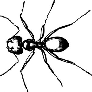 for kindergarten Free Printable Ant Coloring Pages For Kids for boys