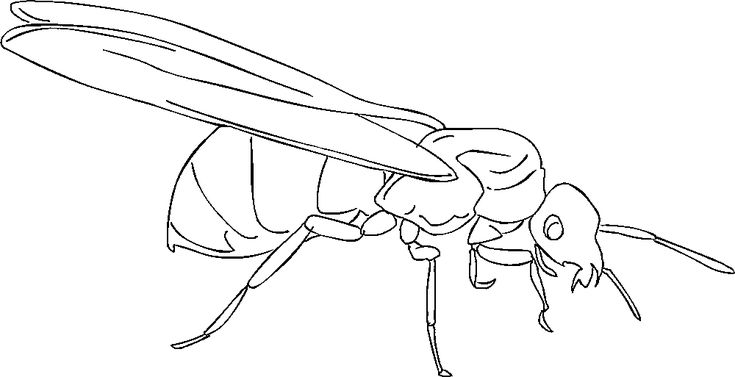 for kids Free Printable Ant Coloring Pages For Kids online
