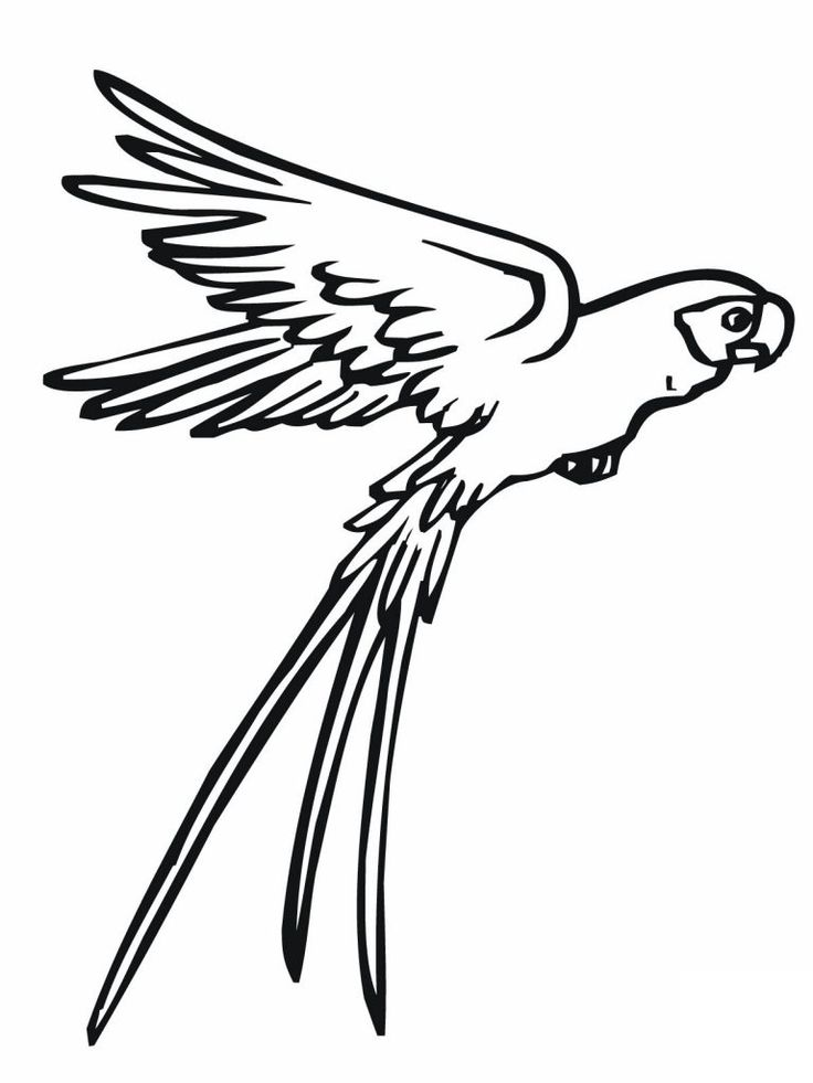 free Free Printable Parrot Coloring Pages For Kids online