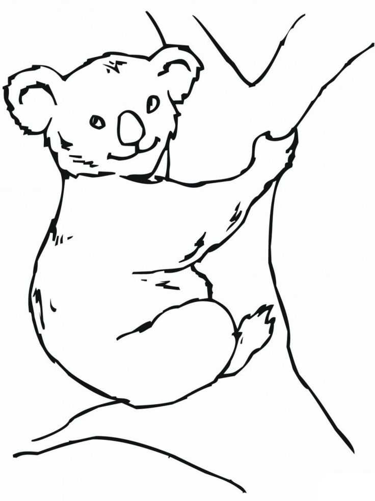 easy Free Printable Koala Coloring Pages For Kids free