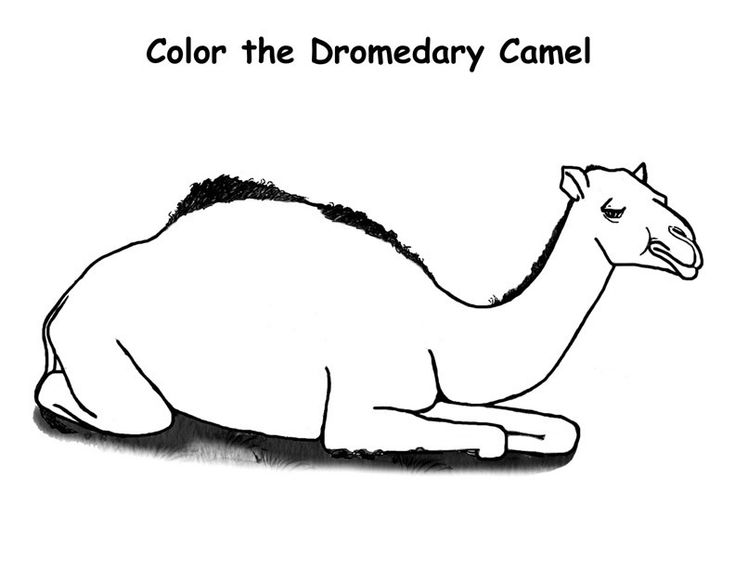 easy Free Printable Camel Coloring Pages For Kids free