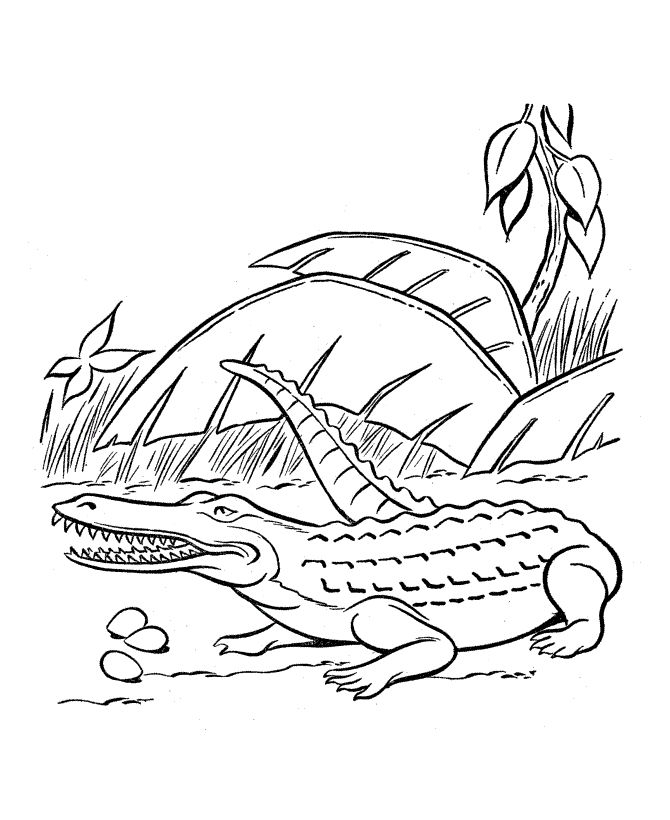 pdf Free Printable Crocodile Coloring Pages For Kids already colored