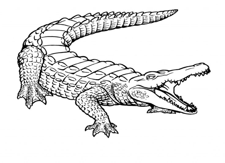 pdf Free Printable Crocodile Coloring Pages For Kids free