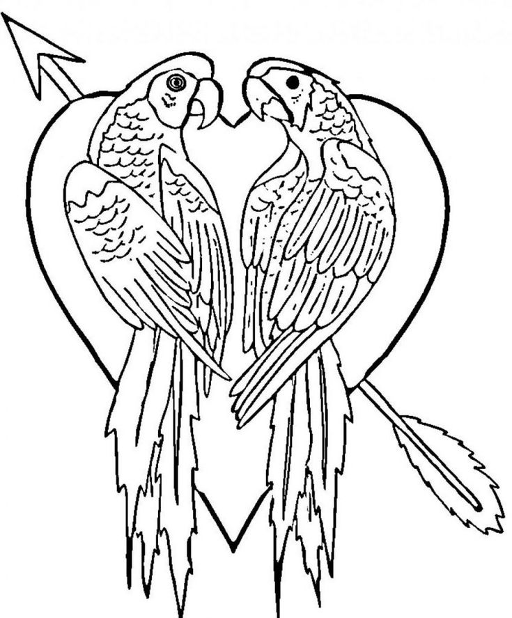 simple Free Printable Parrot Coloring Pages For Kids for teens