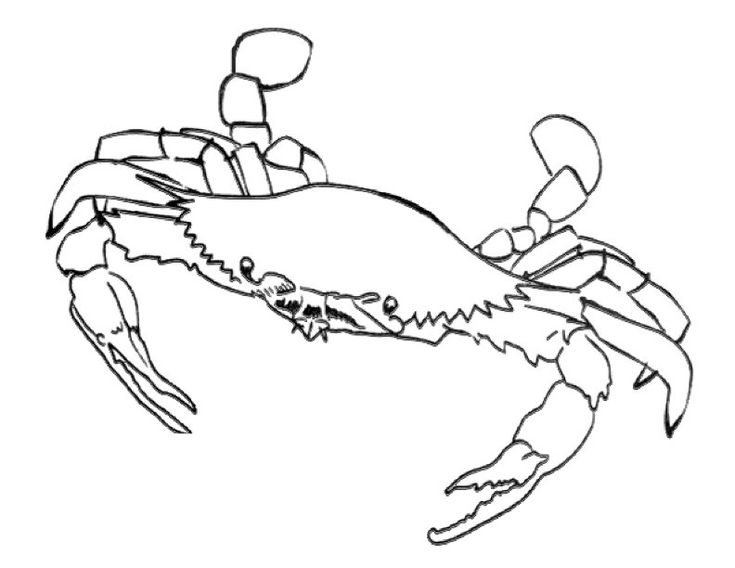 to print out Free Printable Crab Coloring Pages For Kids to print out