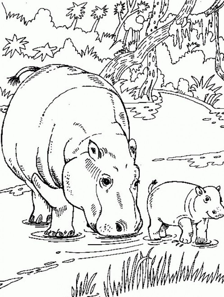 for kindergarten Free Printable Hippo Coloring Pages For Kids for sunday school