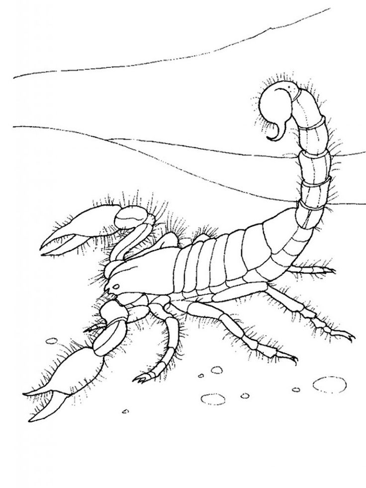 for girls Free Printable Scorpion Coloring Pages For Kids for girls