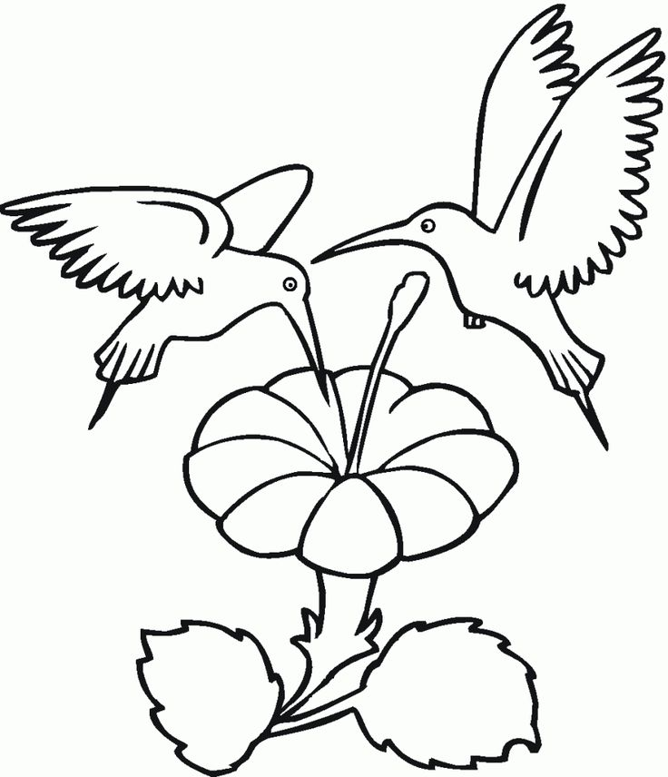 easy Free Printable Hummingbird Coloring Pages For Kids toddler